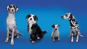 dog_sizes_blk.wht-56a2687f3df78cf772753c22